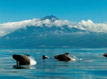 I delfini all'isola di pico