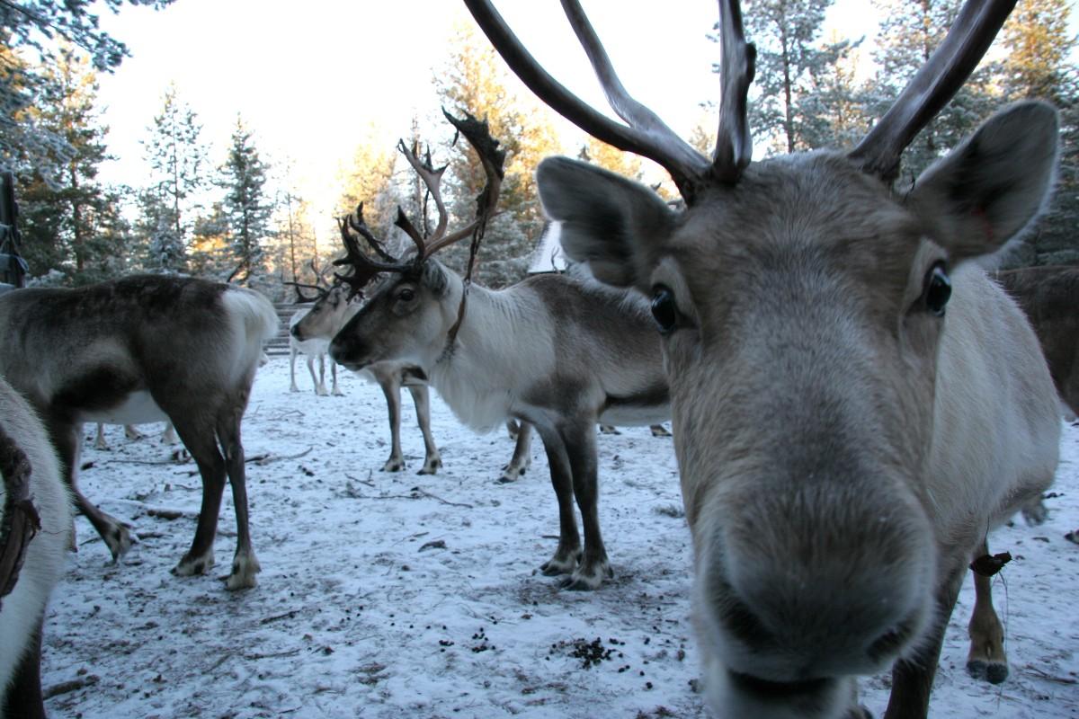 Viaggio di gruppo immersi nella natura finlandese for Piani di fattoria con foto