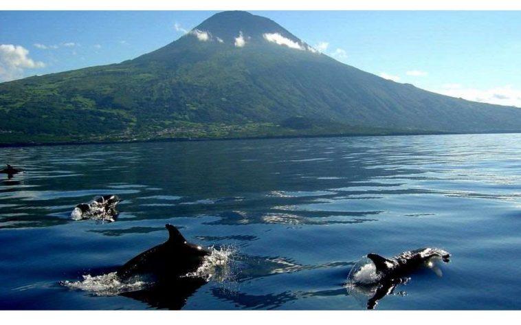 Risultati immagini per whale-watching isole azzorre