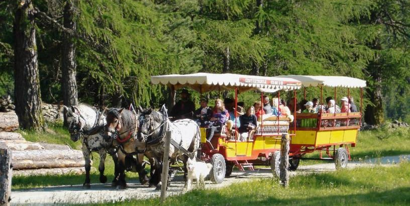 carrozze trainate dai cavalli
