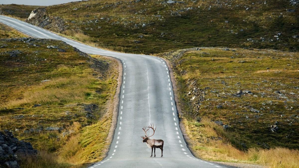la lapponia norvegese