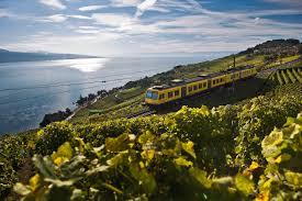 il treno delle vigne