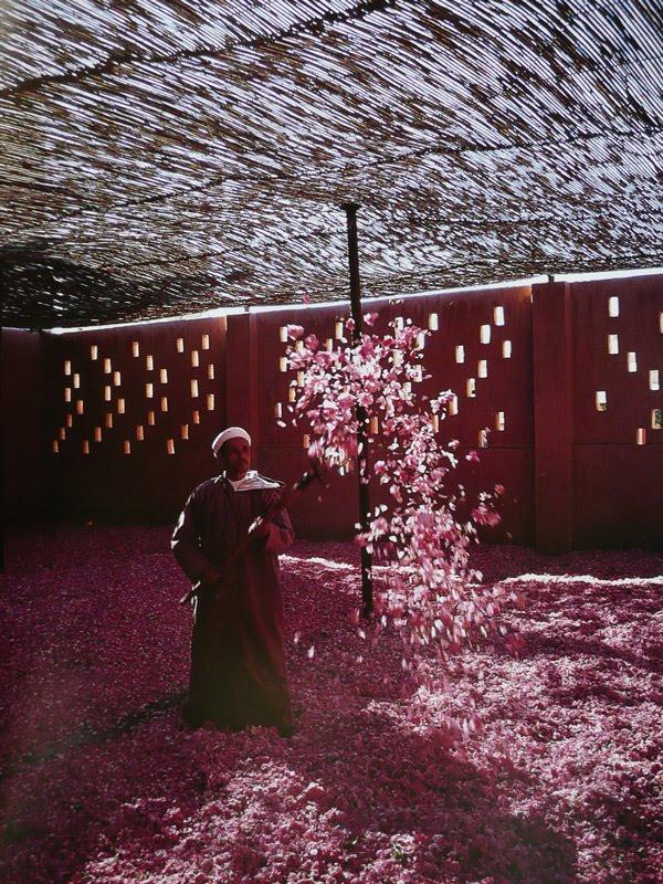 Maroccovalle-delle-rose-003