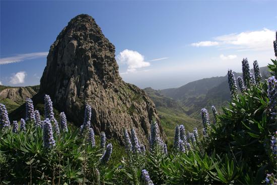 la gomera e i fiori del parco nazionale Garajonay