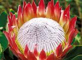 madera-fiori