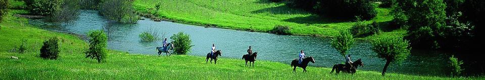 sardegna-cavalli