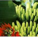 tenerife-banane
